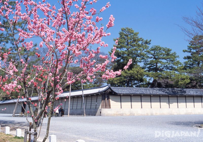 Plum blossoms at Kyoto Imperial Palace Park_1