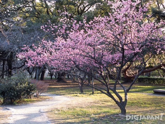 Kyoto Imperial Palace Park_3