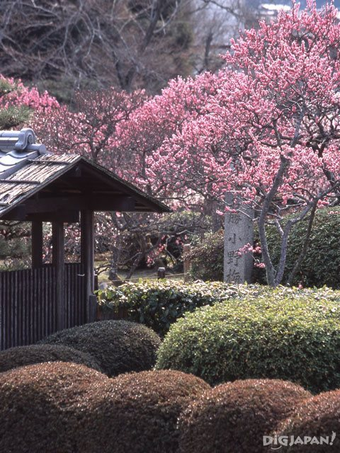 Plum blossoms at Zuishin-in Temple_3