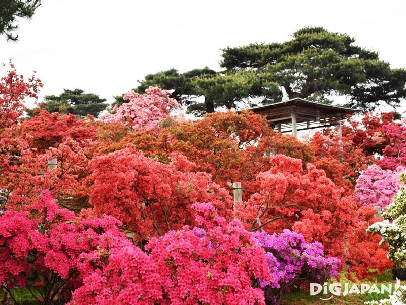 Tsutsujigaoka Park1