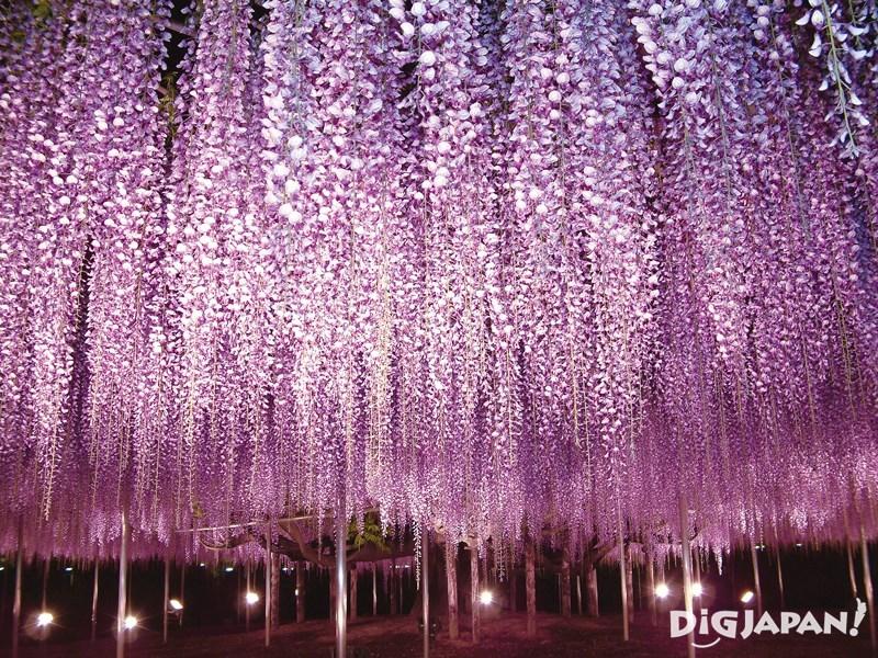 Ashikaga Flower Park1