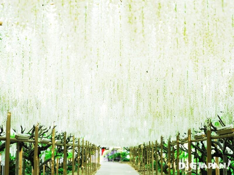 Ashikaga Flower Park2