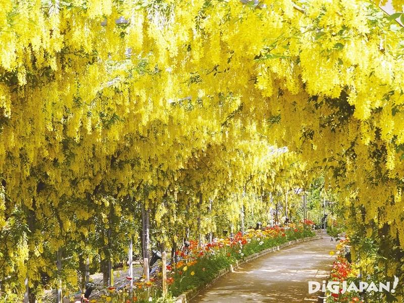 Ashikaga Flower Park3