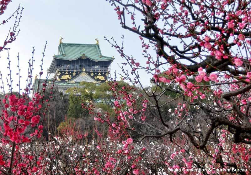 Osaka Castle plum blossoms