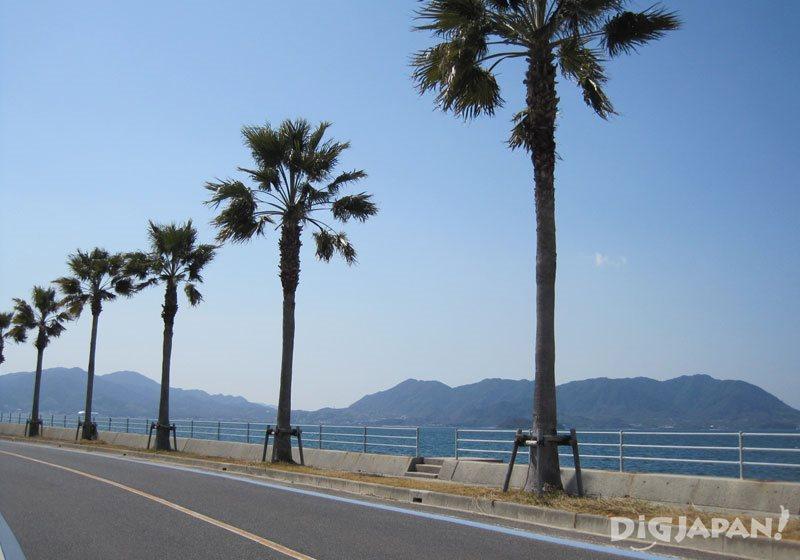 生口島のサイクリング_1