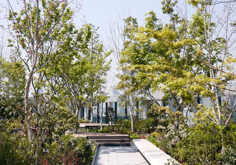 感受东京四季变迁的各种植物