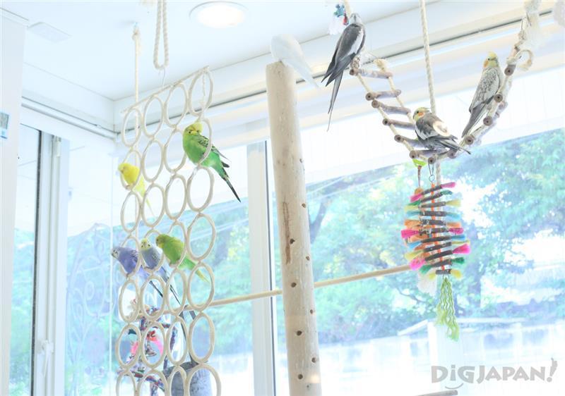 色彩鮮豔的鳥兒們在店中嬉戲