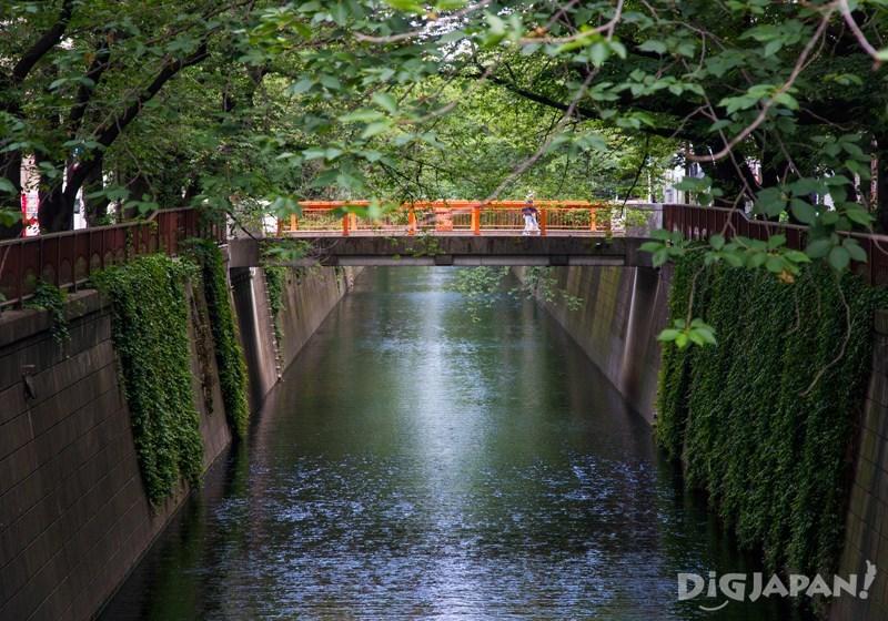 บรรยากาศเขียวขจีรอบๆแม่น้ำเมกุโระ