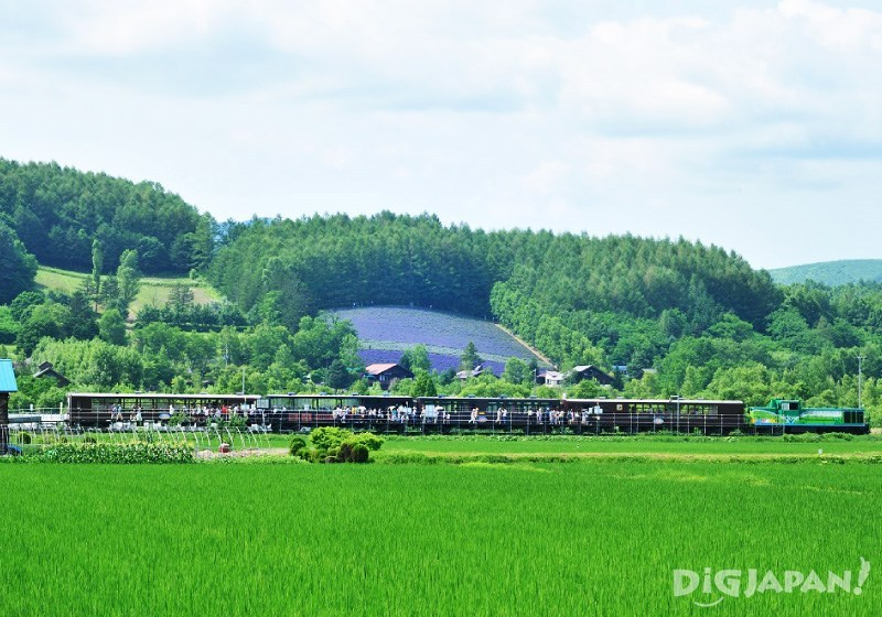 The lavender fields at Farm Tomita: The scenery you should