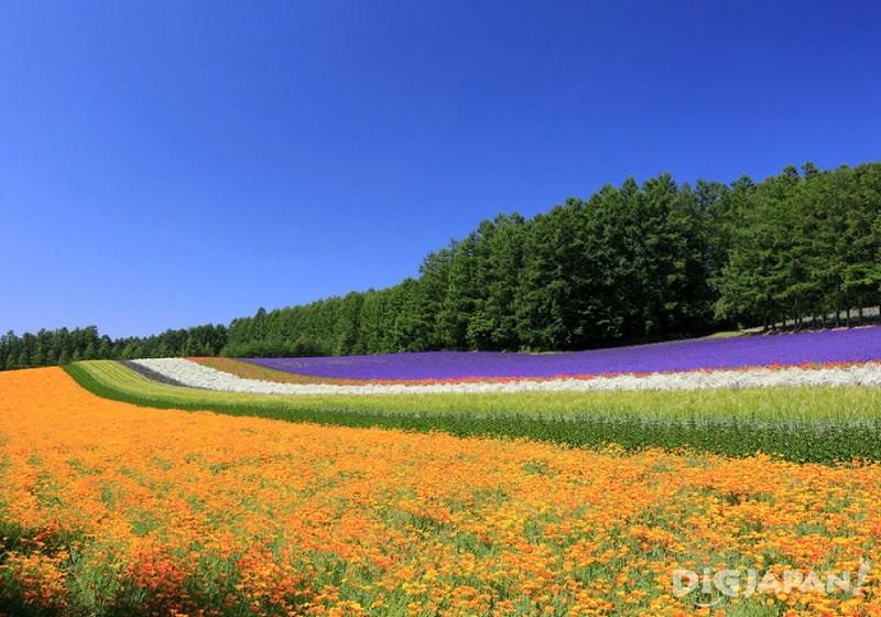 color scheme field