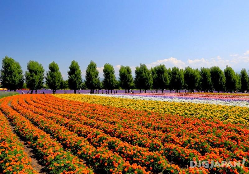 Flower viewer field