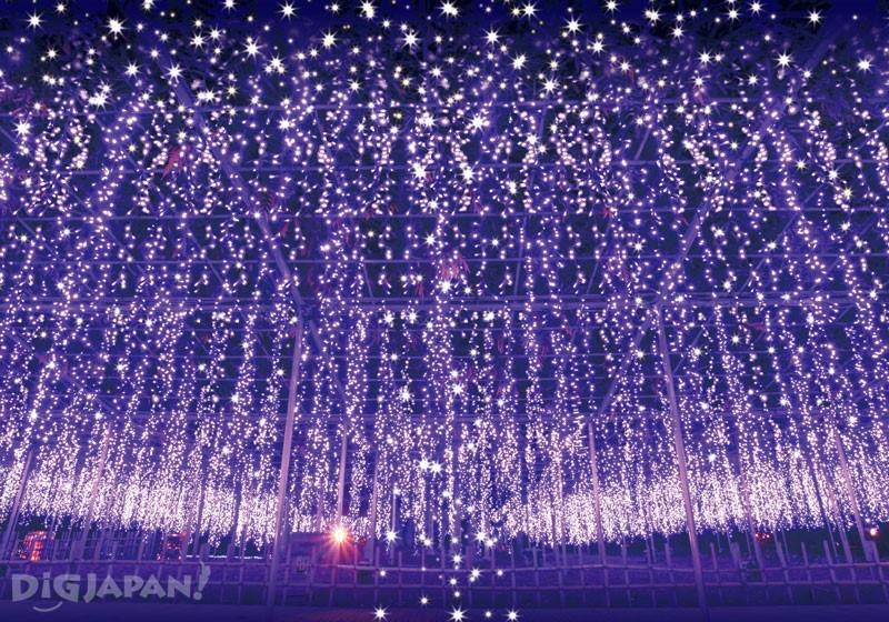 足利花卉公園彩燈