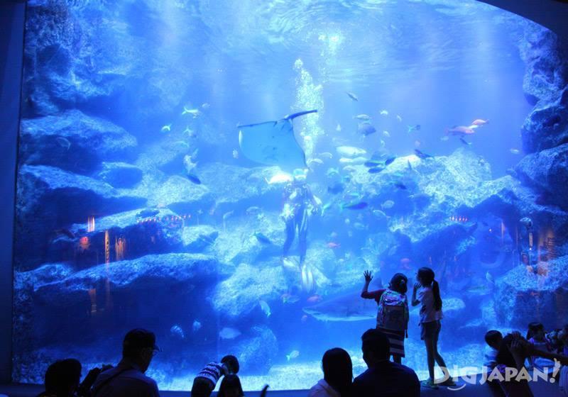 Sumida水族館餵食