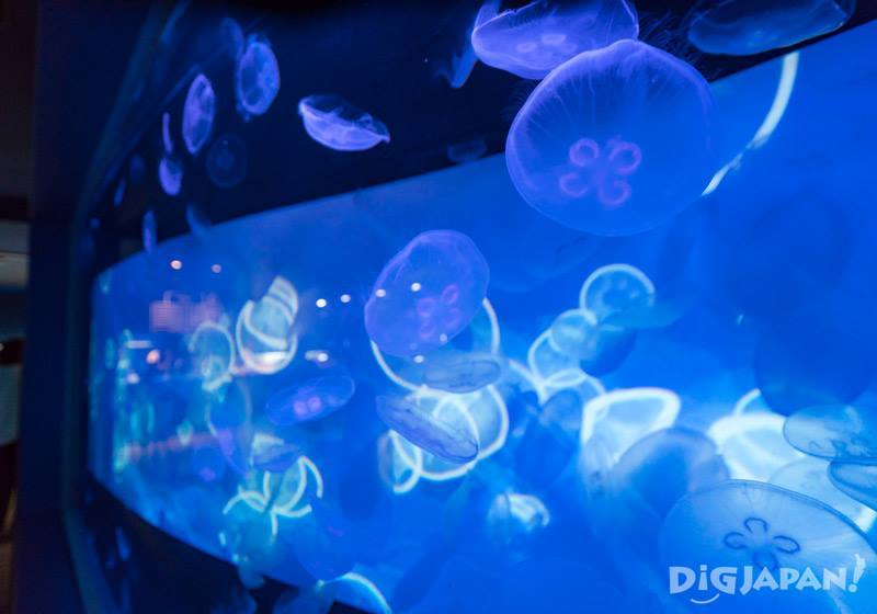 Sumida水族館水母