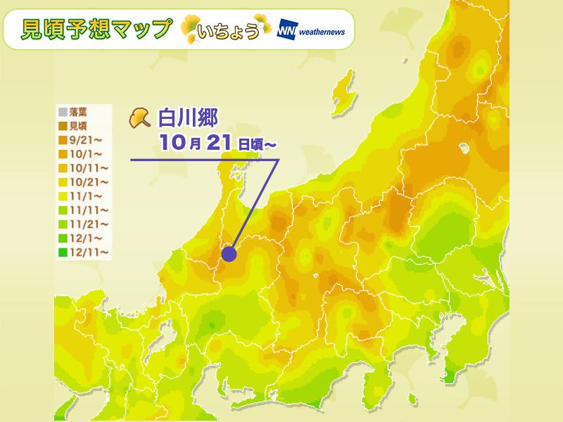 紅葉人気エリア:中部・北陸 の見頃予想(いちょう)
