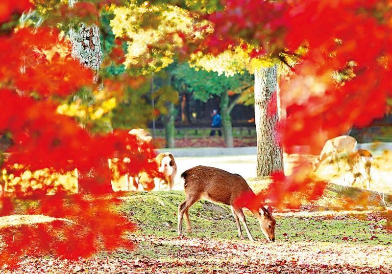 奈良公园(奈良县)