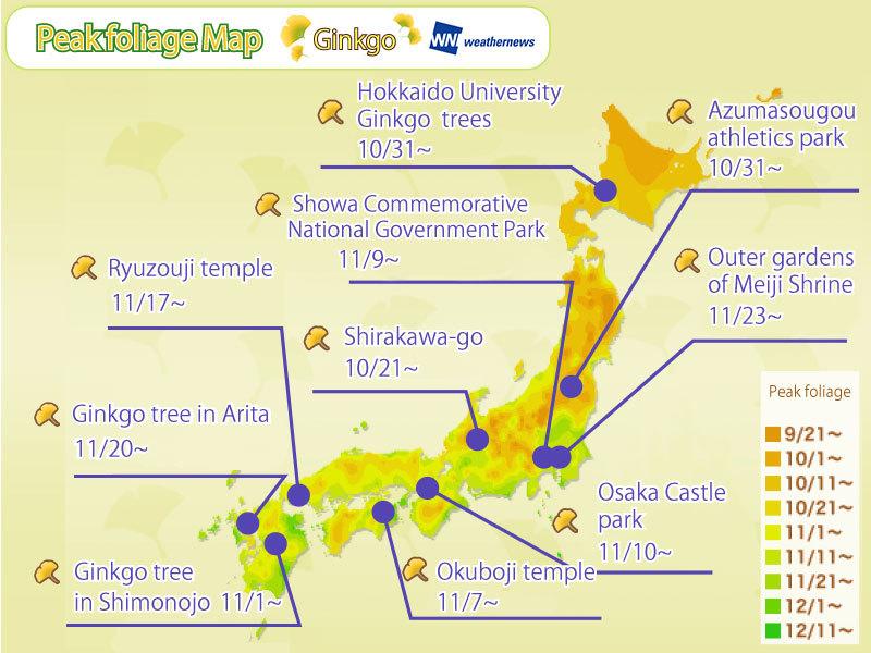 ใบไม้เปลี่ยนสีทั่วประเทศญี่ปุ่น : พยากรณ์ดู`ใบแปะก๊วย`เปลี่ยนสีตามสถานที่ต่างๆ