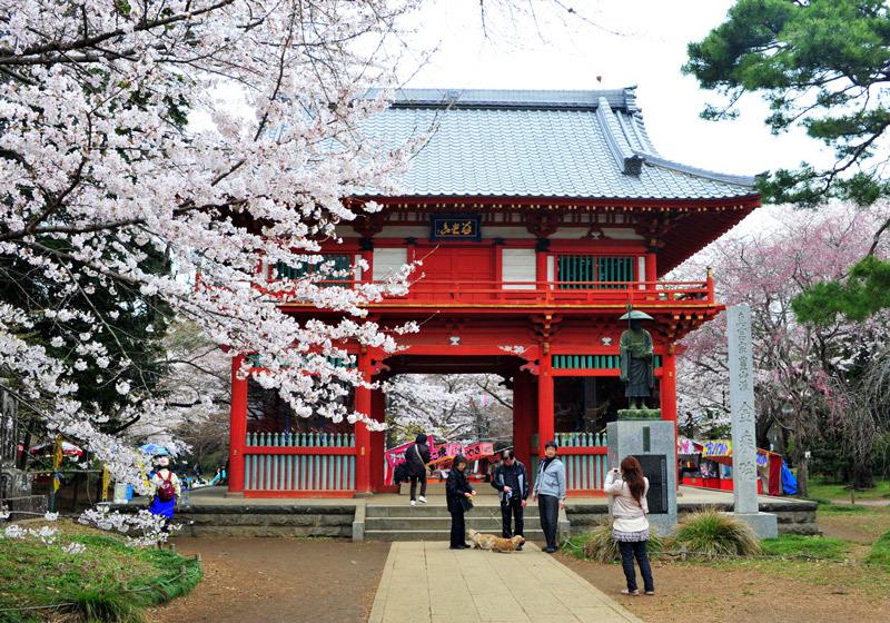 1ใน 100 สุดยอดสถานที่ชมดอกซากุระ สวน Shimizukoen