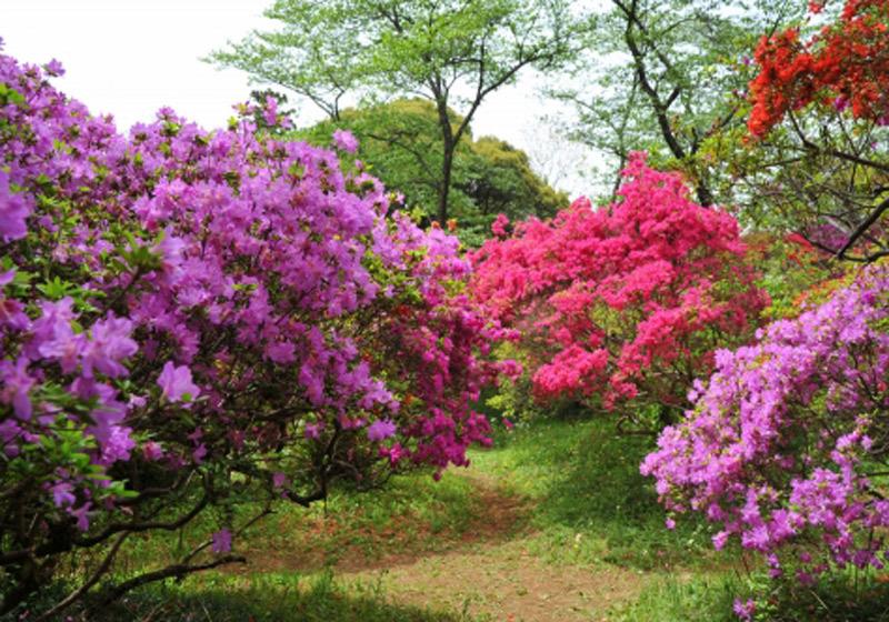 Shimizu Park2