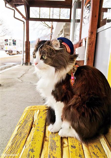 猫咪站长辣咘1
