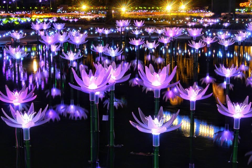足利花卉公園光之庭園