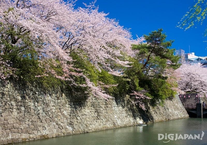 骏府城公园是赏樱胜地