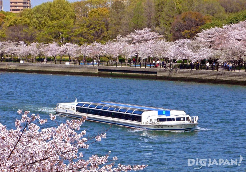 Aqua-Liner Water Bus in Osaka with cherry blossoms