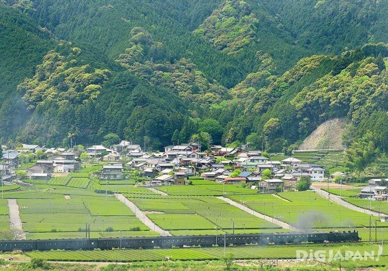 茶畑の間を走る大井川鐵道のSL車両