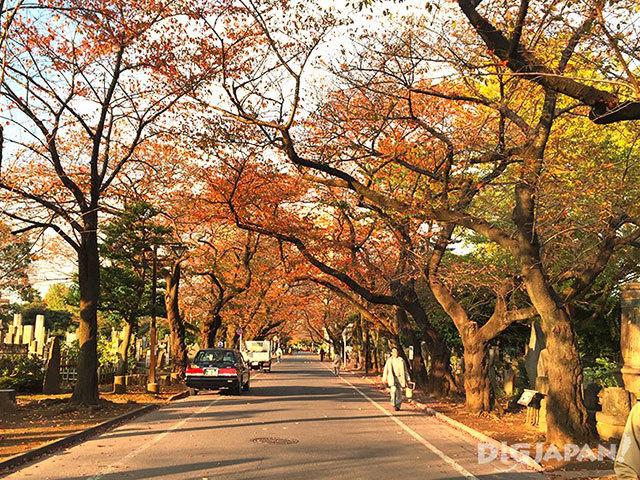 谷中陵園也是周圍人常去的散步景點
