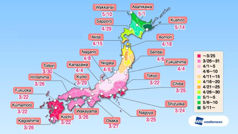 ช่วงเวลาดูซากุระบานในแต่ละเมืองทั่วประเทศ 2018