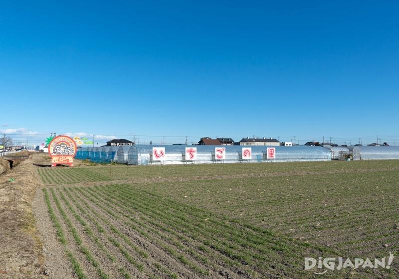 溫室大棚、餐廳和農場直銷點