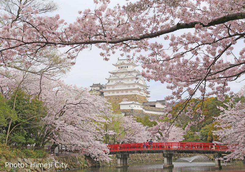 姫路城(兵庫)的櫻花