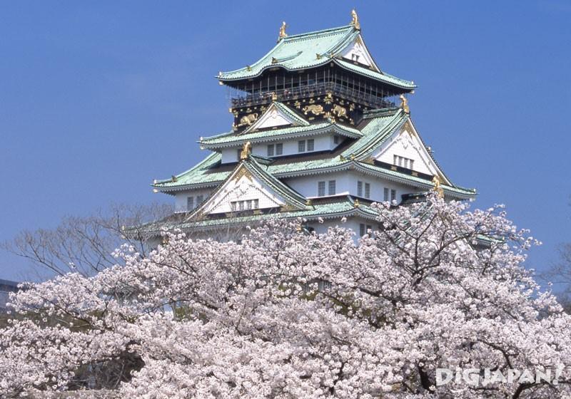 大阪城公園(大阪)的櫻花