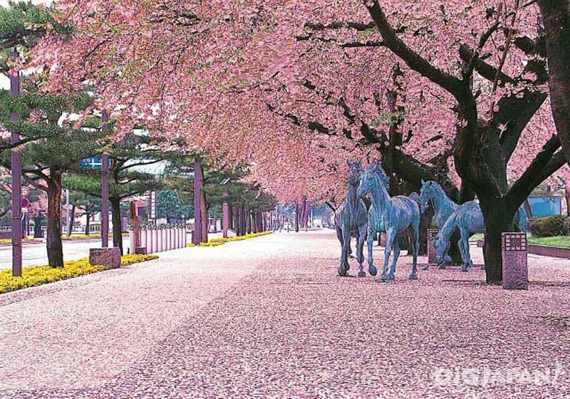 青森县十和田官厅街大道(驹街道)1