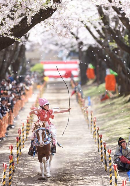桜流鏑馬2