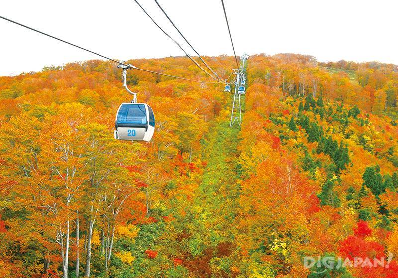 是像絨毯一般美成一片的紅葉絕景