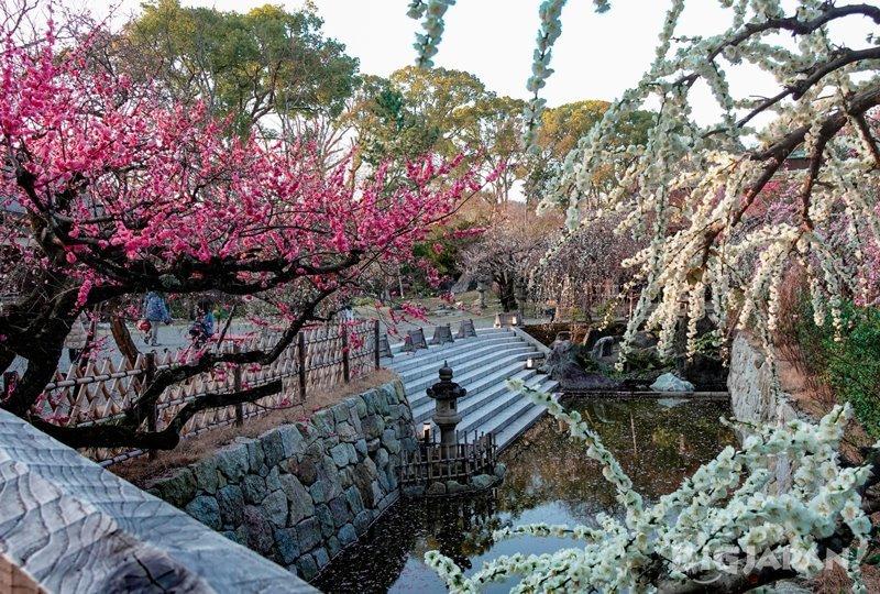 北野天滿宮的梅苑