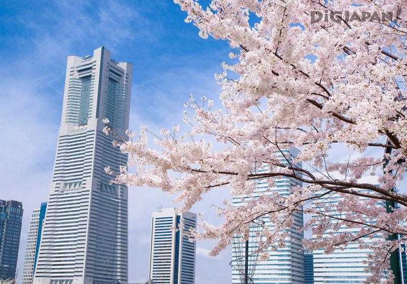 Yokohama Landmark Tower with Sakura