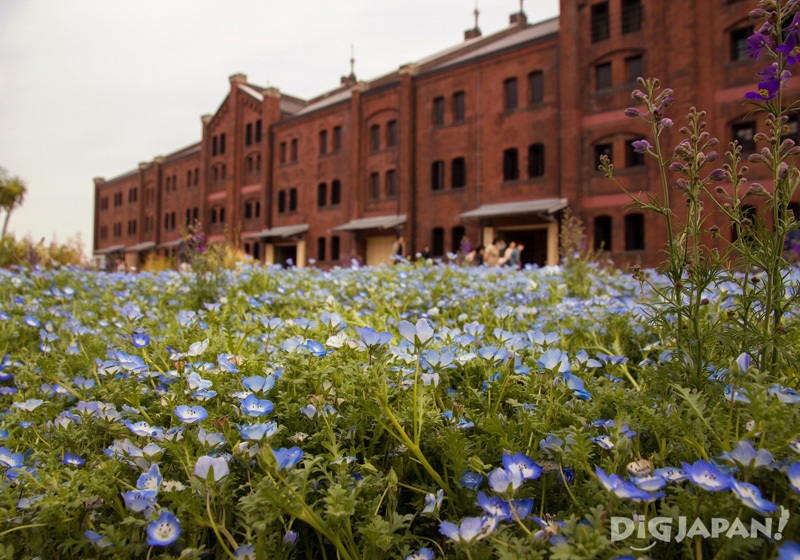 Yokohama Red Brick Warehouse with flowers