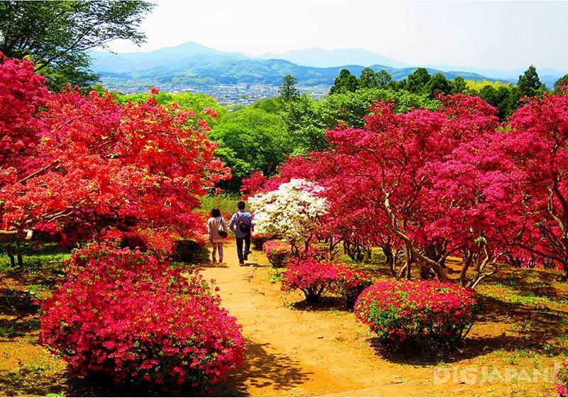 笠間杜鵑花祭7