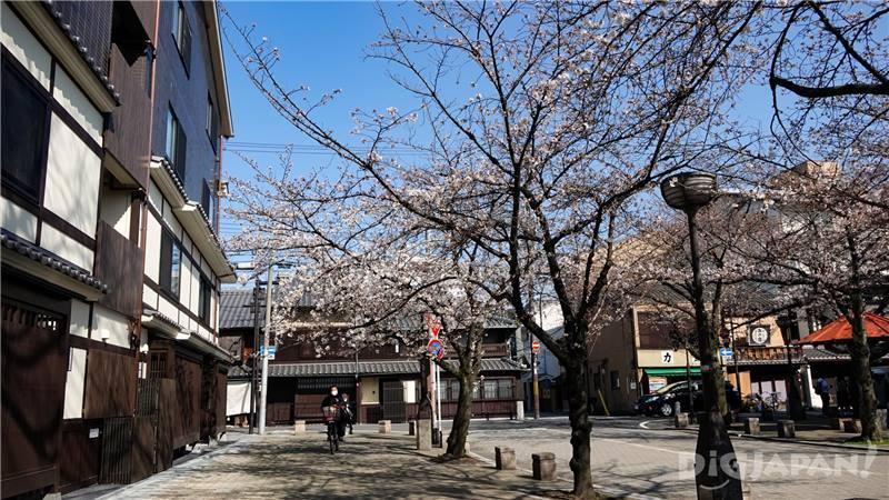 櫻花樹下還有提供可小憩