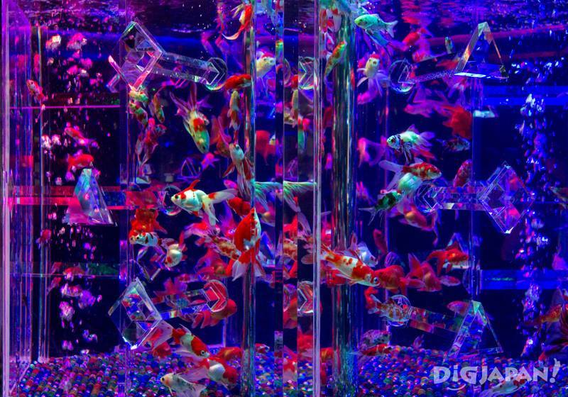 ECO EDO 日本桥艺术水族馆2018-9
