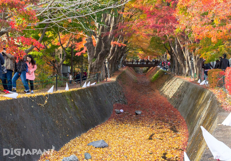 Momiji corridor at Lake Kawaguchi