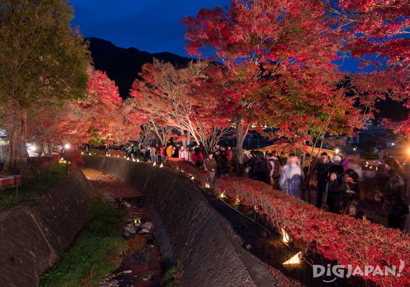 Night illumination of the momiji corridor