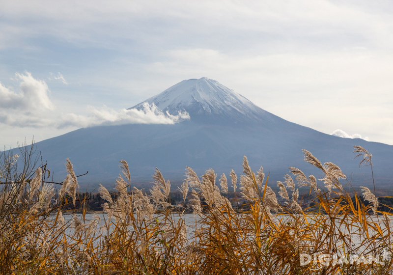 Susuki grass and Mount Fuji