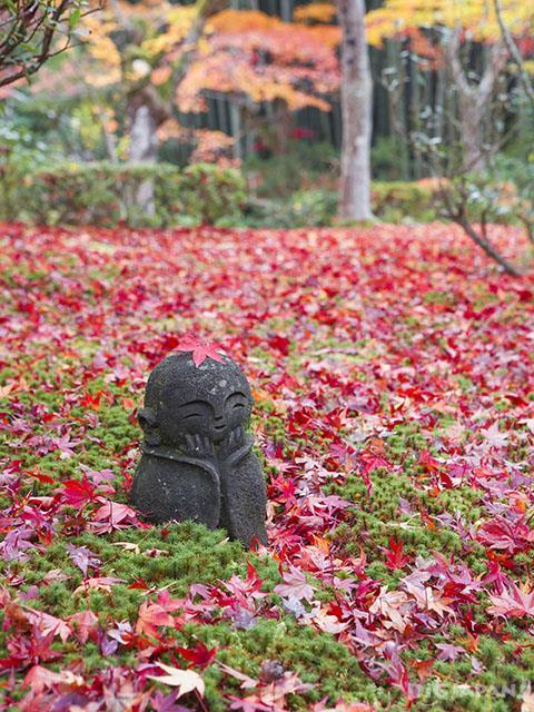 Autumn leaves at Enkoji Temple, Kyoto