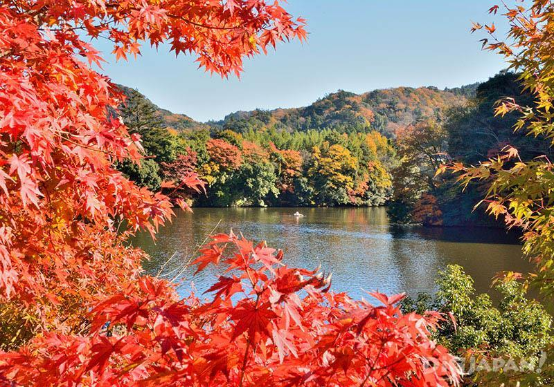 Autumn leaves at Lake Kameyama, Chiba
