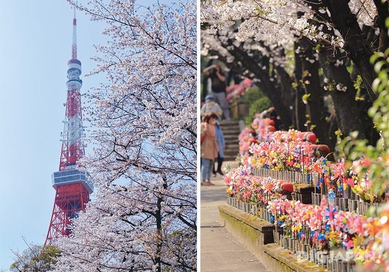 芝公園から見た東京タワーと桜