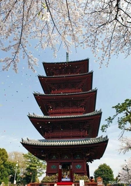 池上本門寺 五重塔と桜