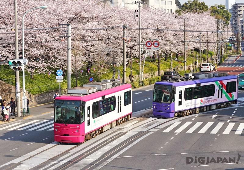 飛鳥山公園の桜と路面電車